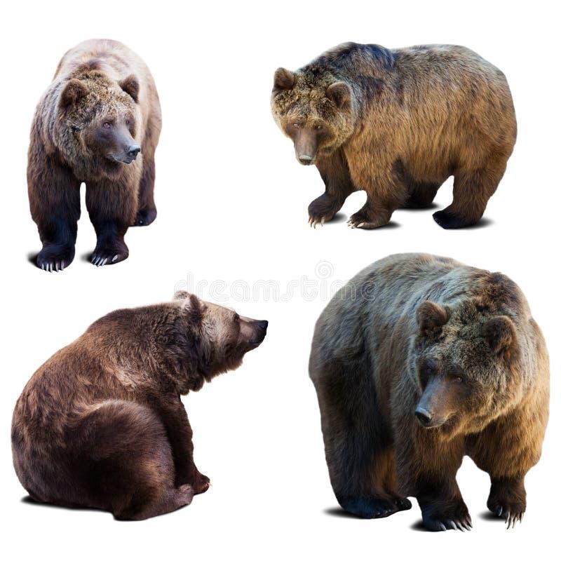 Grupo de urso sobre o fundo branco foto de stock royalty free