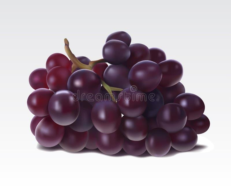 Grupo de uvas ilustração royalty free