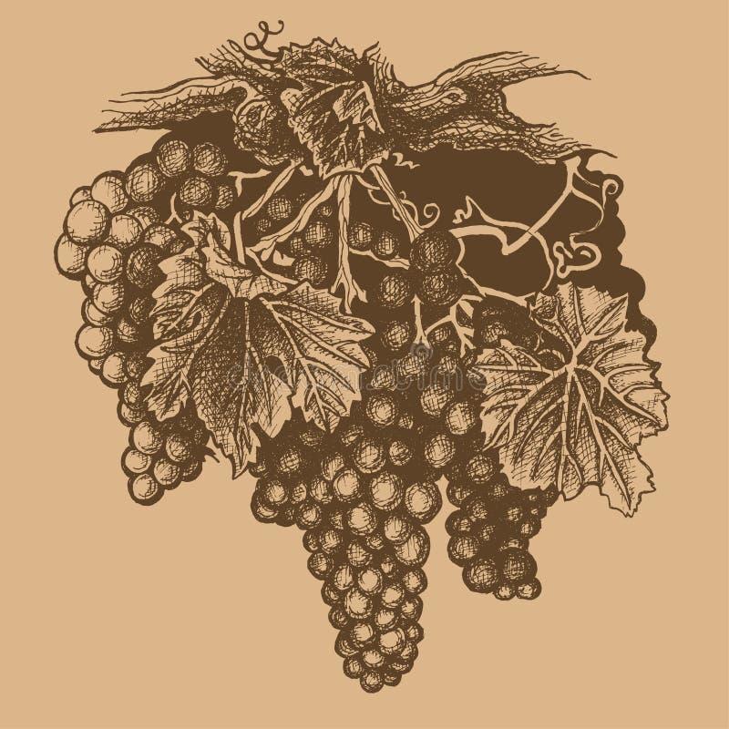Grupo de uvas ilustração do vetor