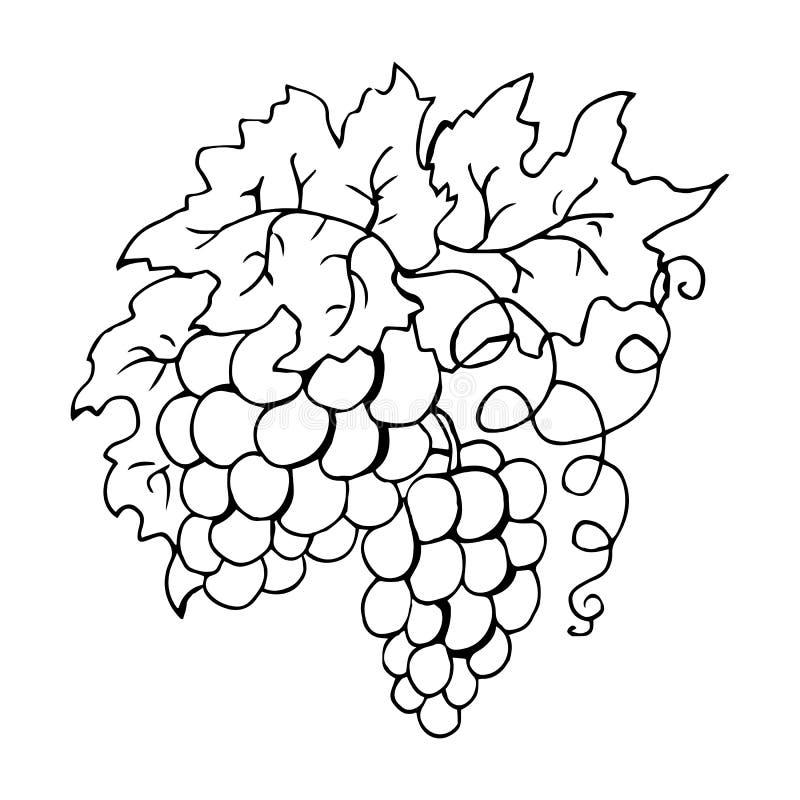 Grupo de uvas ilustra??o do vetor do livro para colorir ilustração stock
