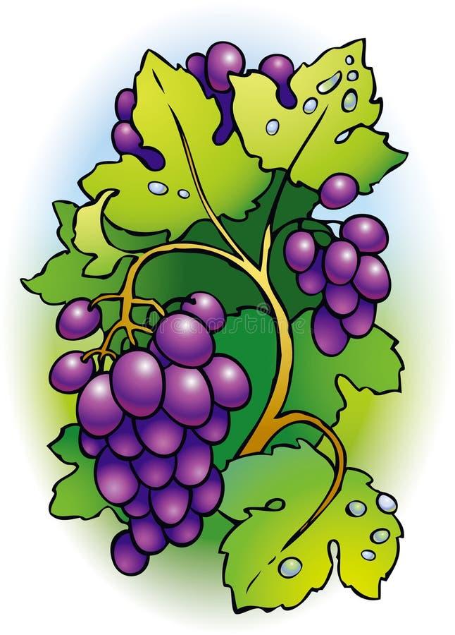 Grupo de uvas na videira ilustração royalty free