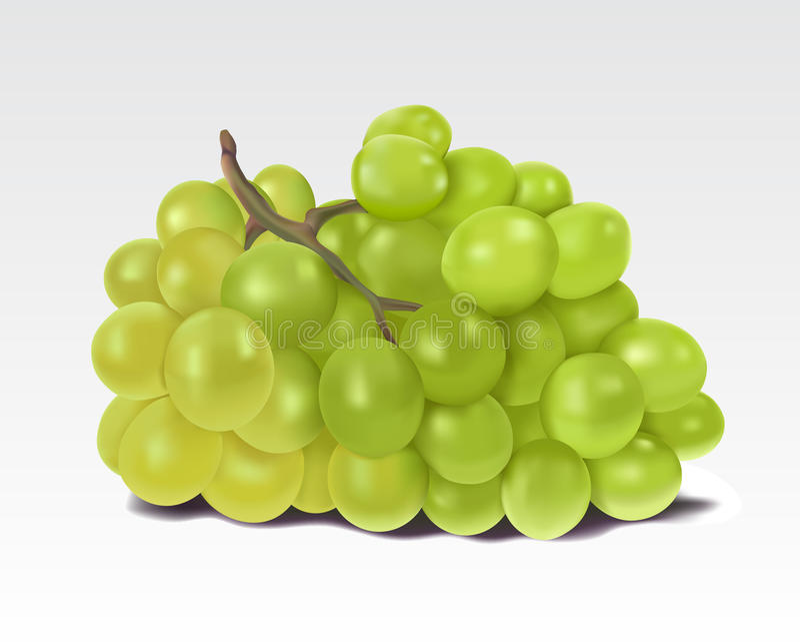 Grupo de uvas verdes ilustração do vetor