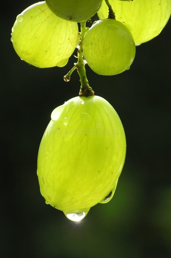 Grupo de uvas verdes fotos de stock royalty free