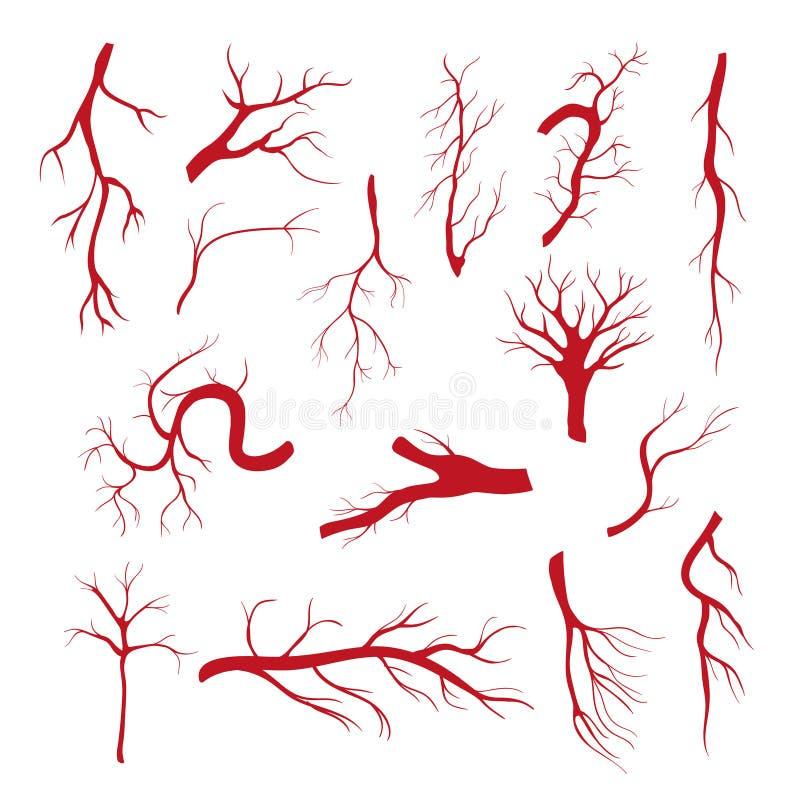 Grupo de vasos sanguíneos - o vetor moderno isolou o clipart ilustração do vetor