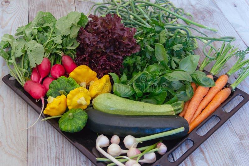 Grupo de vegetais do início do verão fotos de stock royalty free