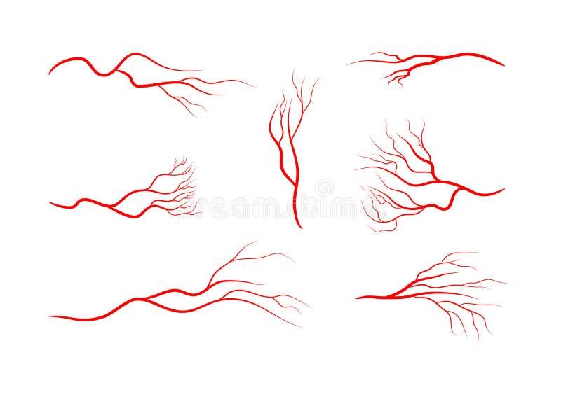 vaso sanguíneo para teste capilar