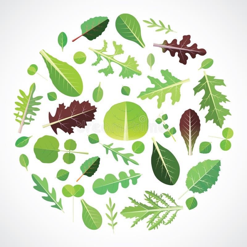 Grupo de verdes da salada ilustração stock