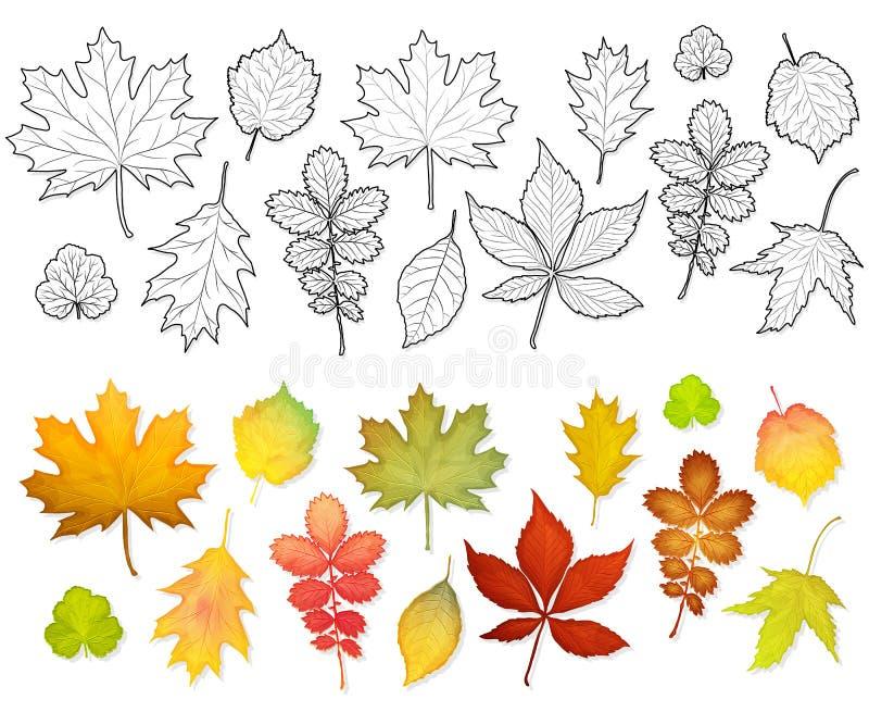 Grupo de vetor colorido das folhas ilustração do vetor