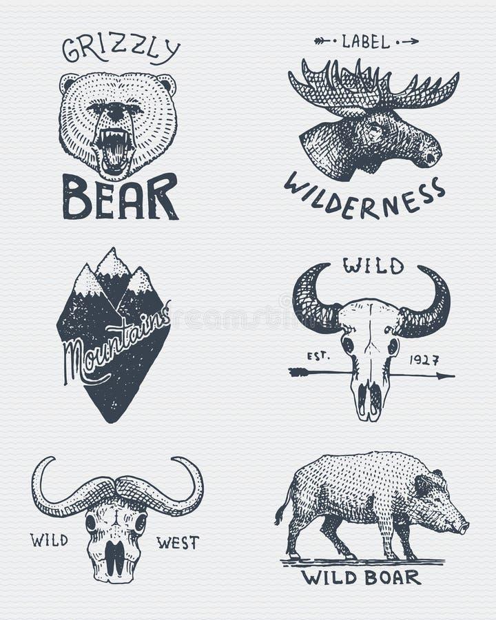 Grupo de vintage gravado, mão tirada, velha, etiquetas ou crachás para acampar, caminhada, caçando com urso pardo, alces ilustração do vetor