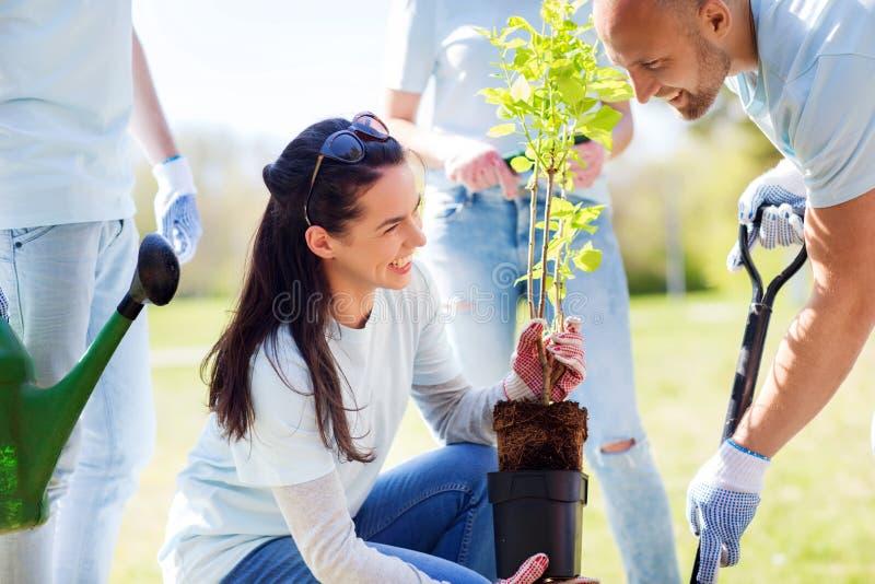 Grupo de voluntarios que plantan el árbol en parque fotografía de archivo