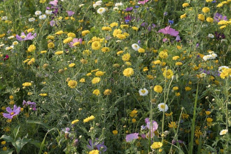 Grupo de wildflowers de florescência coloridos no parque urbano, Milão, Itália imagem de stock royalty free