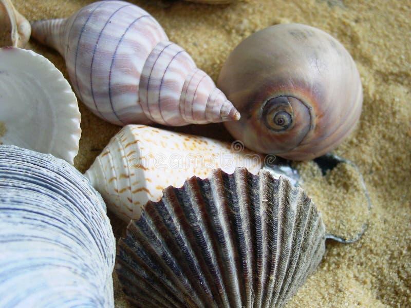 Grupo del shell imágenes de archivo libres de regalías