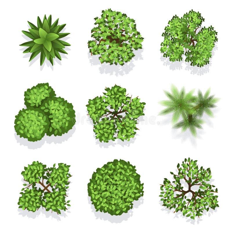 Grupo diferente do vetor das plantas e das árvores da vista superior para o projeto arquitetónico ou da paisagem ilustração do vetor