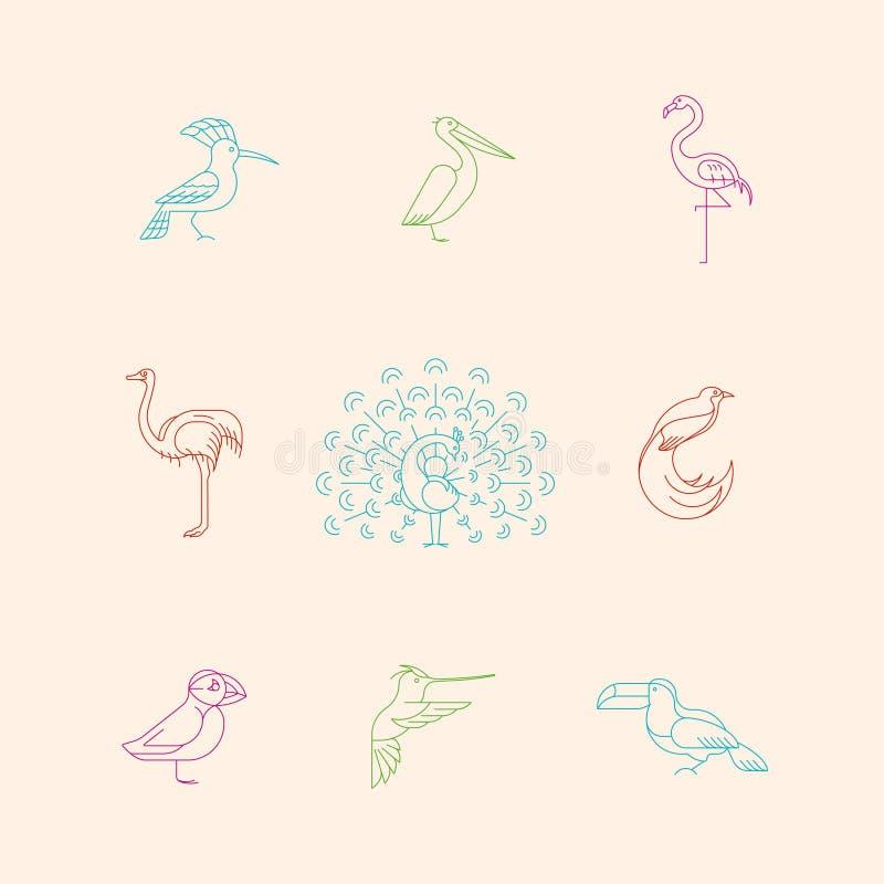 Grupo diferente dos ícones dos pássaros ilustração royalty free