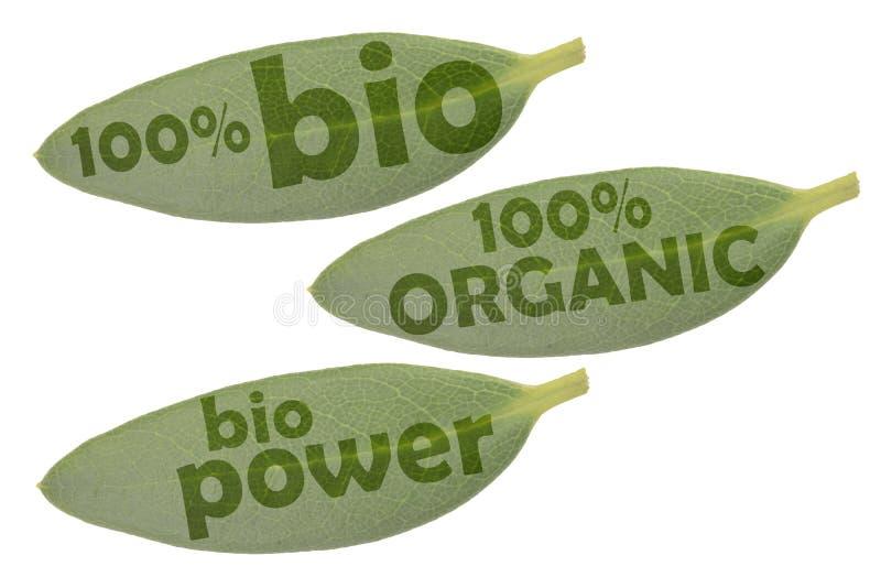 Grupo do ícone com as três folhas verdes e as inscrição 100% orgânico, poder orgânico e bio de 100% imagem de stock