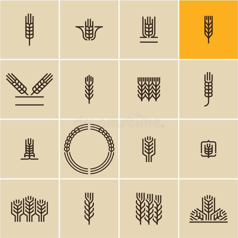 Grupo do ícone da orelha do trigo, orelhas do trigo ilustração royalty free