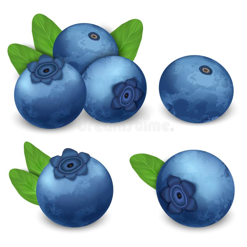 Grupo do ícone da uva-do-monte, estilo realístico ilustração royalty free