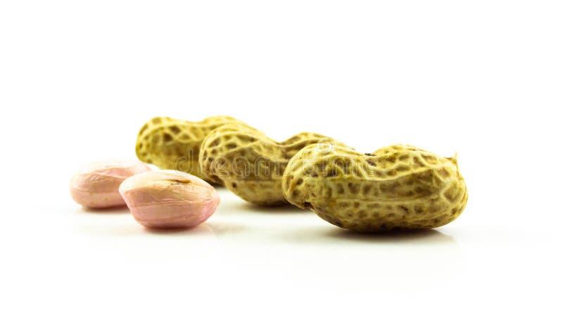 Grupo do amendoim isolado no fundo branco fotos de stock royalty free