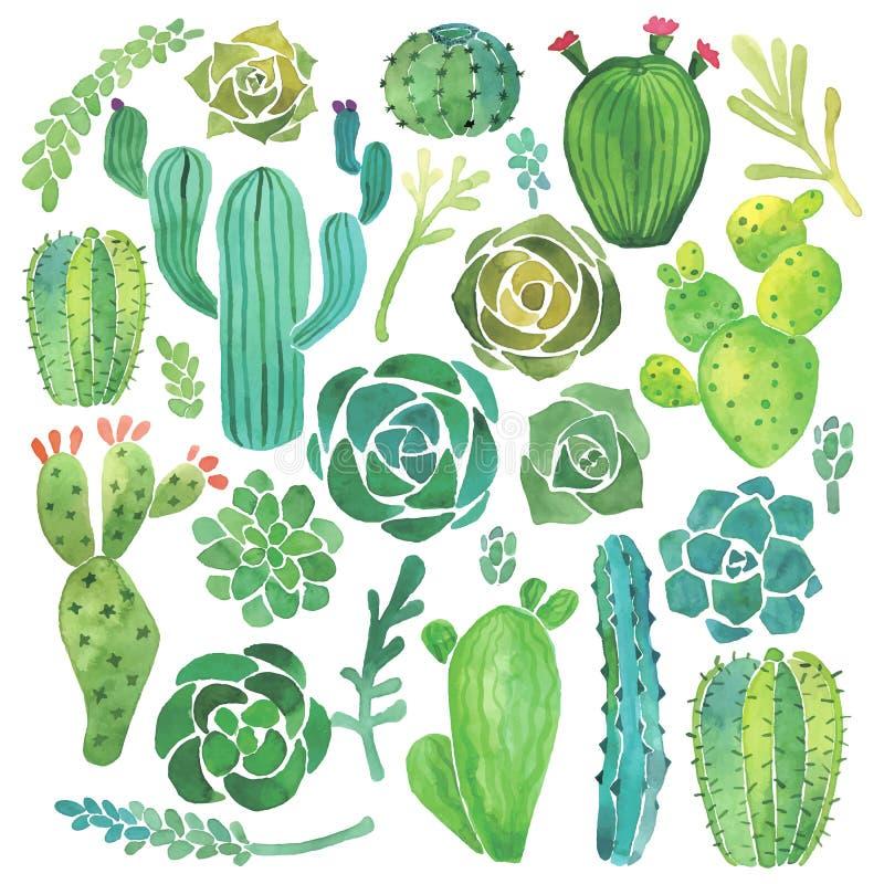 Grupo do cacto e da planta carnuda da aquarela ilustração do vetor