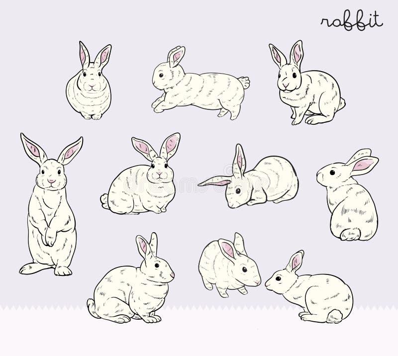 Grupo do coelho ilustração royalty free