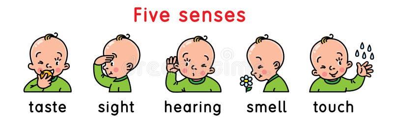 Grupo do ?cone de cinco sentidos ilustração stock