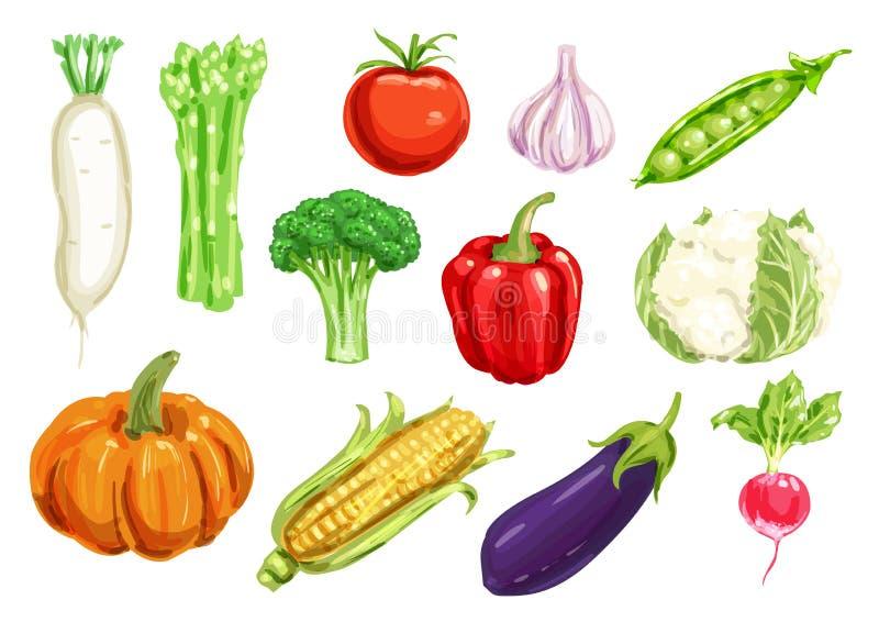 Grupo do desenho da aquarela do legume fresco ilustração do vetor
