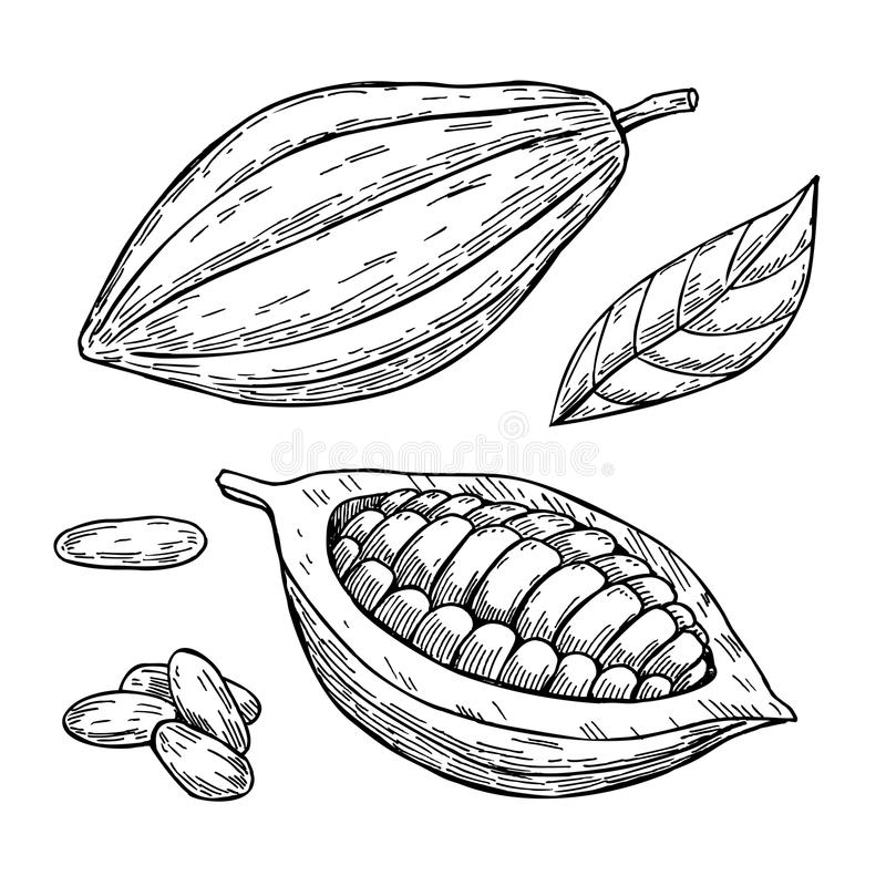 Grupo do desenho do superfood do cacau Mão isolada tirada ilustração stock