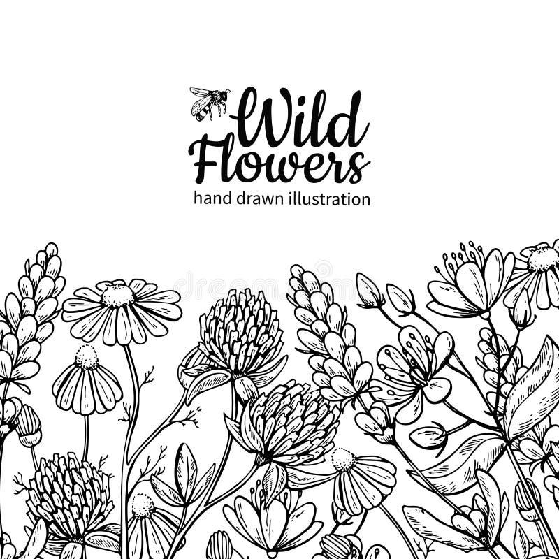 Grupo do desenho do vetor das flores selvagens Plantas e folhas isoladas do prado ilustração do vetor