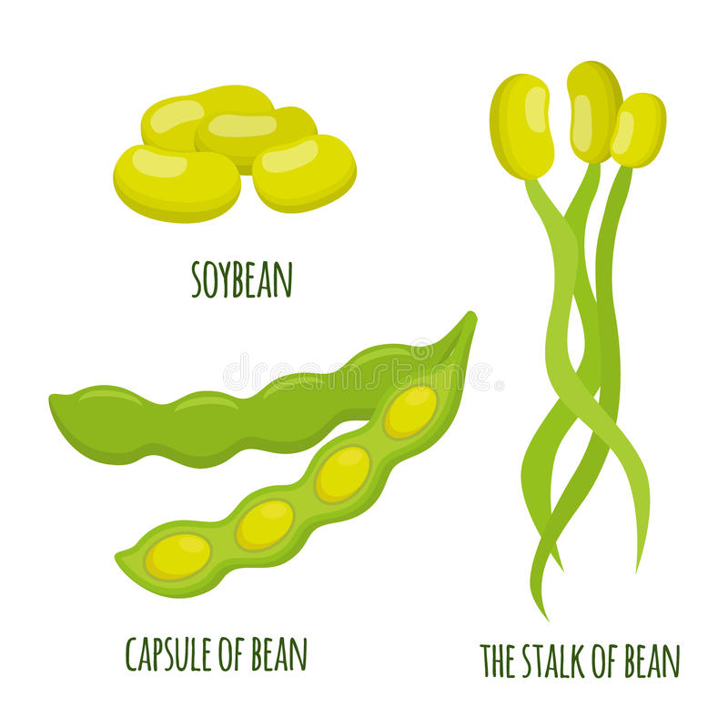 Grupo do feijão de soja Feijões, cápsula da soja, hastes Alimento saudável do vegetariano ilustração do vetor