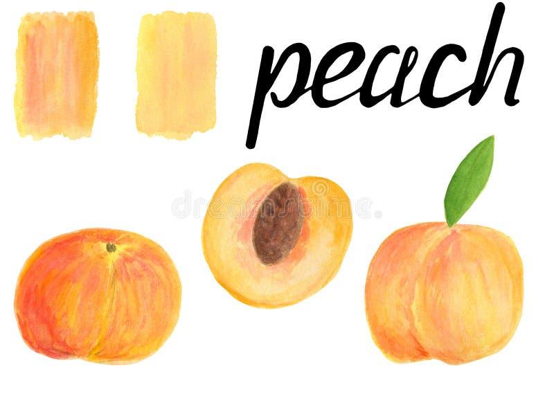 Grupo do fruto da ilustração do pêssego da aquarela com rotulação da caligrafia O todo e a metade com escova coloriram manchas is ilustração do vetor