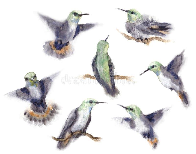 Grupo do pássaro do zumbido da aquarela ilustração stock