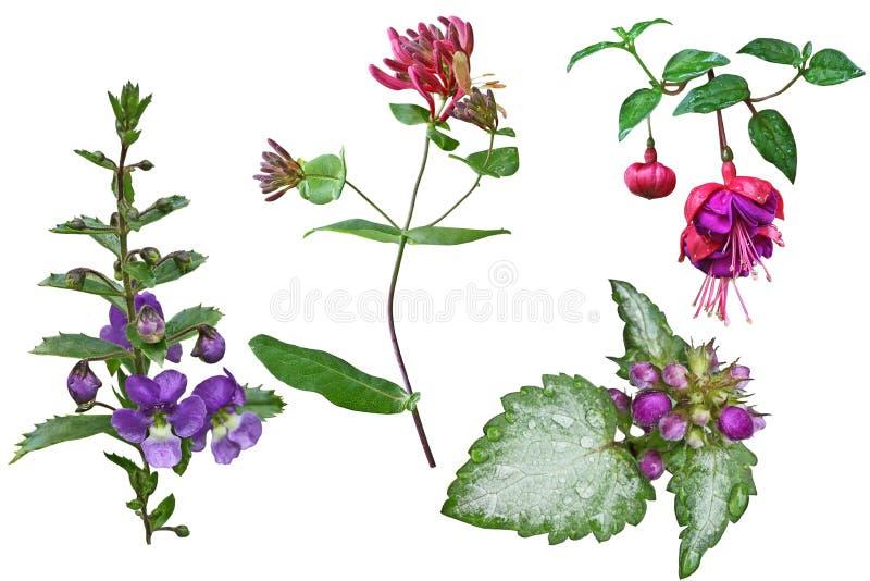 Grupo do ramo da flor imagem de stock