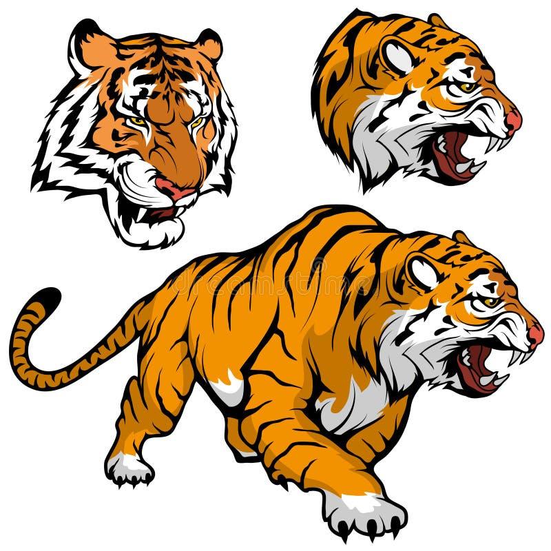Grupo do tigre de Bengal apropriado como o logotipo para a mascote da equipe, esboço real do desenho do tigre no crescimento comp ilustração do vetor