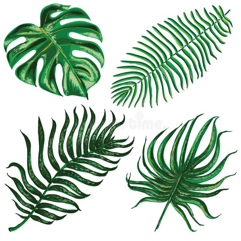 Grupo do vetor com as folhas exóticas tropicais ilustração stock