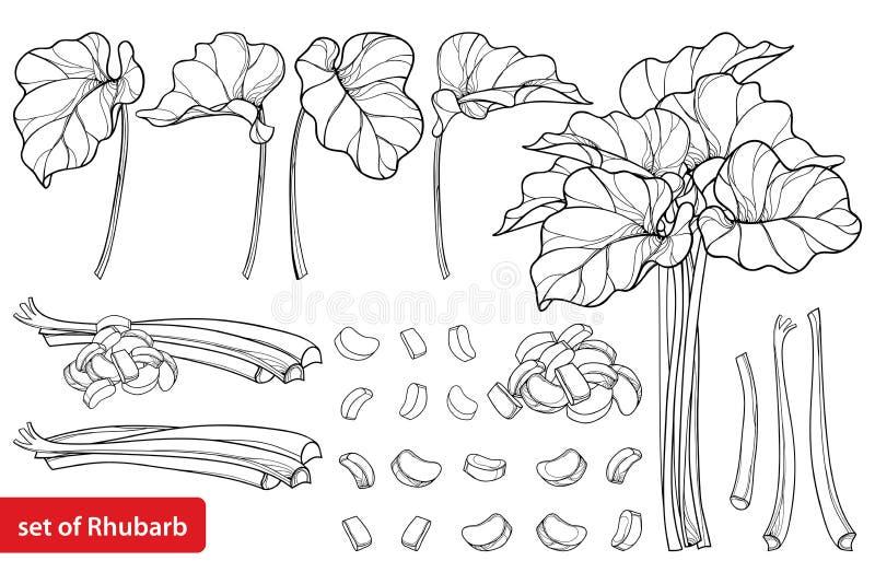 Grupo do vetor com o vegetal do ruibarbo ou do Rheum do esboço no preto isolado no fundo branco Corte do contorno e partes inteir ilustração do vetor