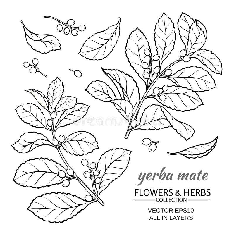 Grupo do vetor do companheiro de Yerba ilustração stock