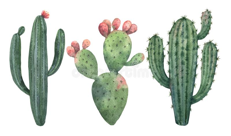 Grupo do vetor da aquarela de cactos e de plantas suculentos isolados no fundo branco ilustração royalty free