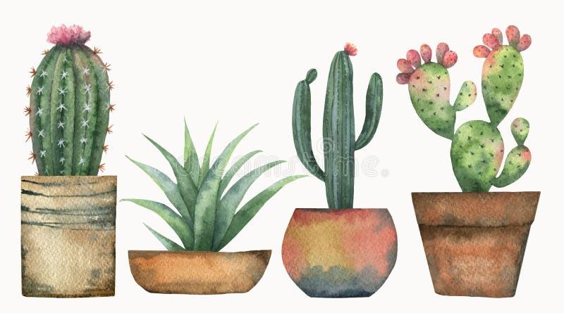 Grupo do vetor da aquarela de cactos e de plantas suculentos isolados no fundo branco ilustração do vetor