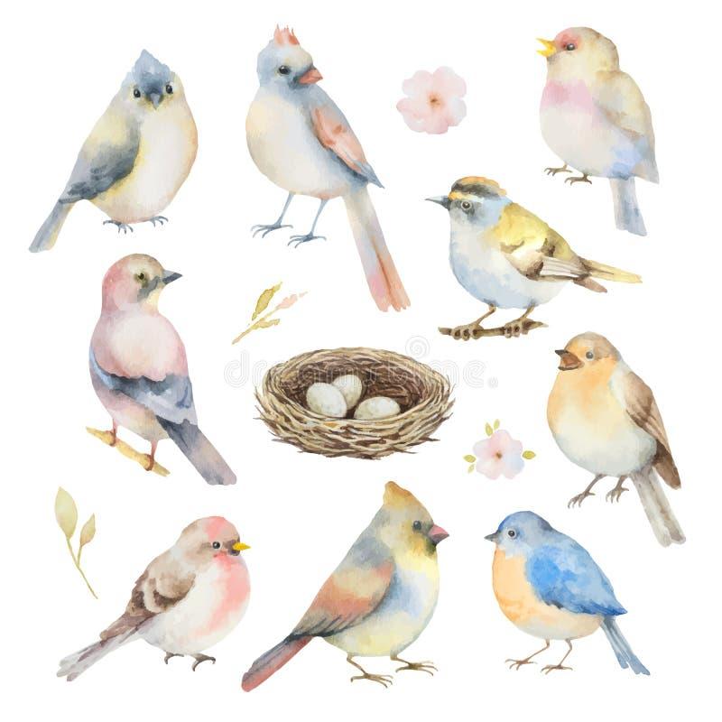 Grupo do vetor da aquarela de pássaros