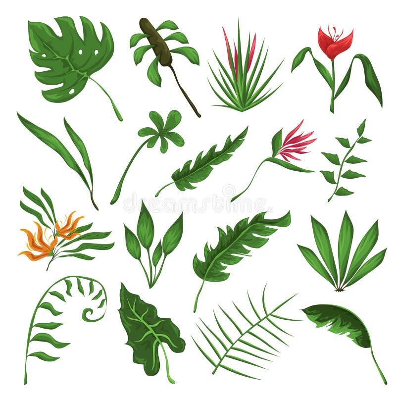 Grupo do vetor das folhas e das flores da selva ilustração do vetor