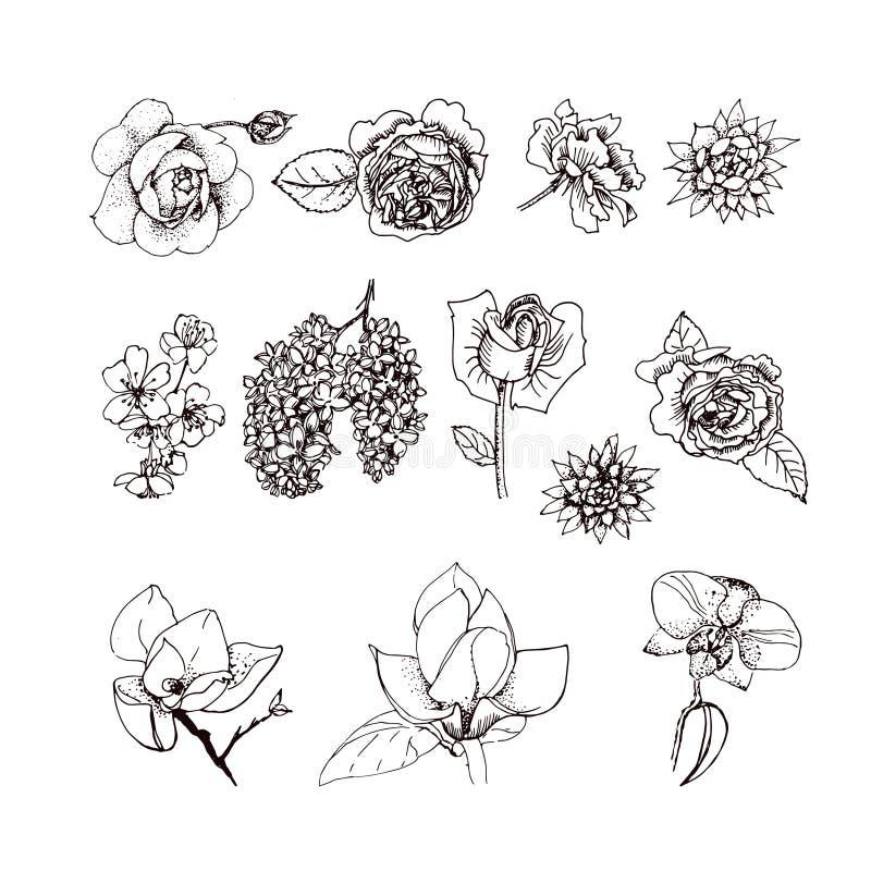 Grupo do vetor das ilustrações da flor ilustração do vetor