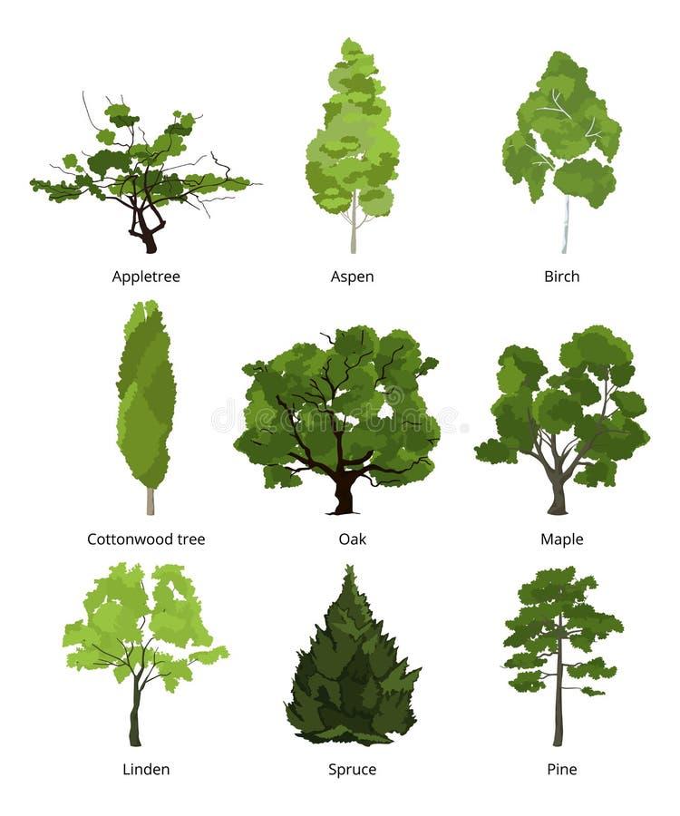 Grupo do vetor de árvores verdes do jardim Isolado das ilustrações da natureza no branco ilustração do vetor
