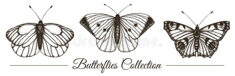 Grupo do vetor de borboletas preto e branco tiradas m?o ilustração do vetor