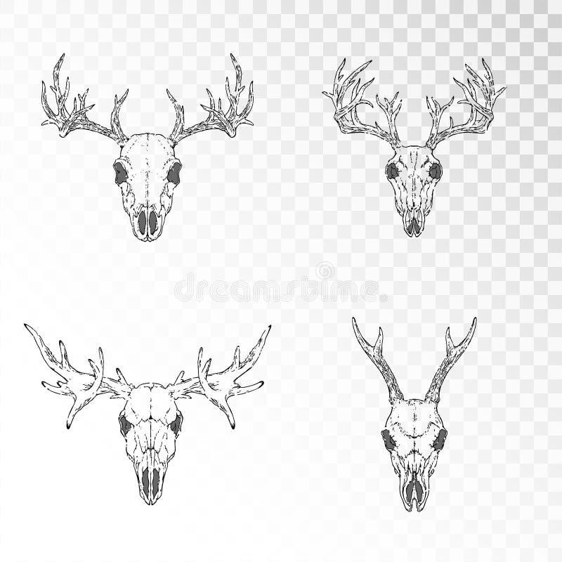 Grupo do vetor de crânios tirados mão de animais horned: fundo transparente dos cervos, do veado e dos alces o Forma linear preta ilustração do vetor
