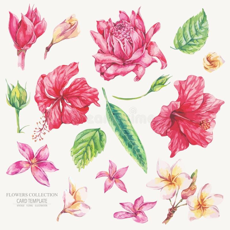 Grupo do vetor de elementos naturais tropicais florais do vintage ilustração royalty free