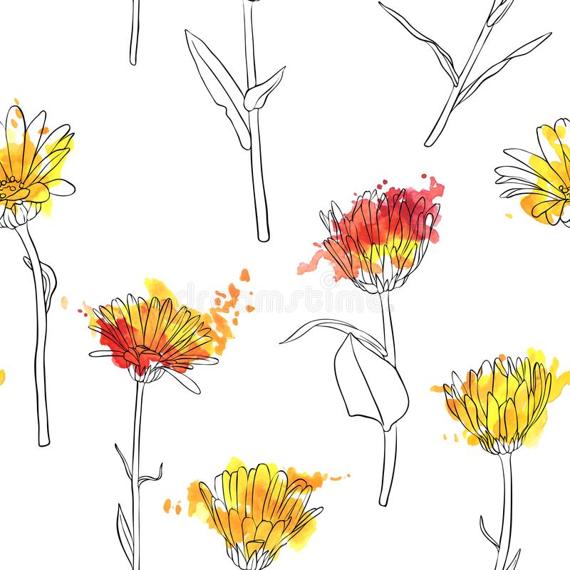Grupo do vetor de flores do calendula do desenho ilustração stock