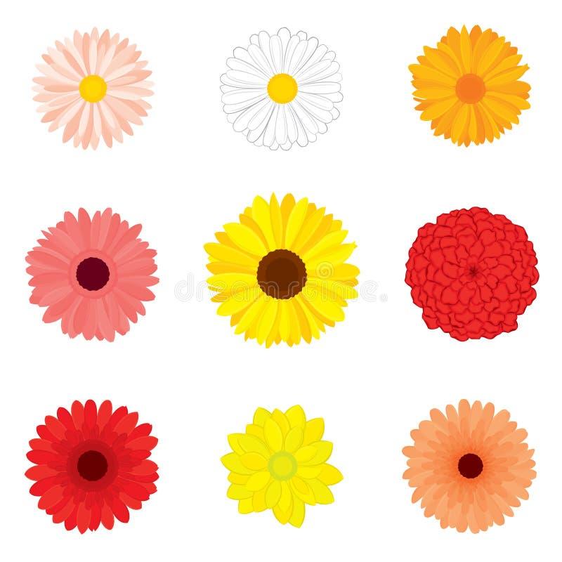 Grupo do vetor de flores em botão detalhadas, realísticas, várias na cor ilustração do vetor