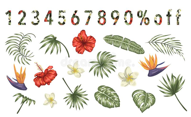 Grupo do vetor de flores tropicais e de folhas isoladas no fundo branco Coleção realística brilhante de elementos exóticos do pro ilustração do vetor