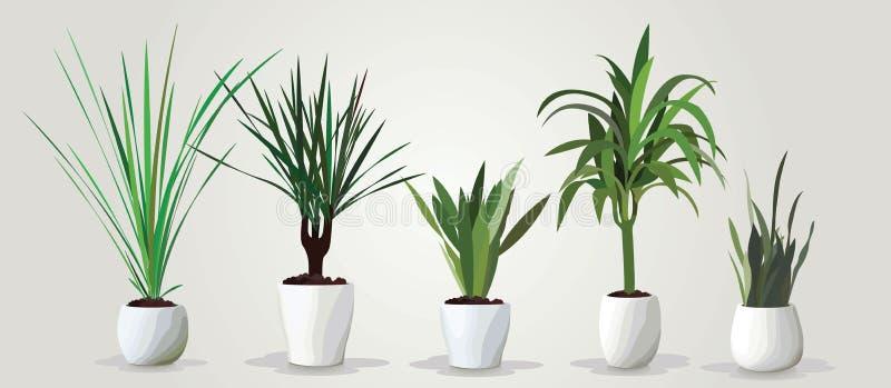 Grupo do vetor de houseplants verdes realísticos em uns potenciômetros ilustração do vetor