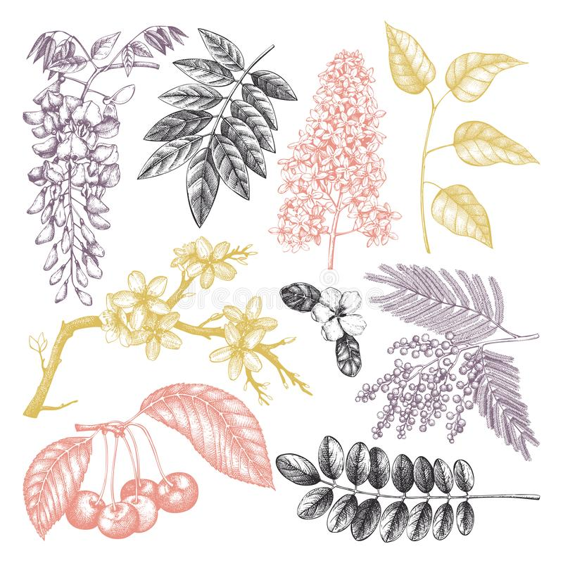 Grupo do vetor de ilustração de florescência tirada mão das árvores Elementos do projeto da mola As flores do vetor esboçam a col ilustração royalty free